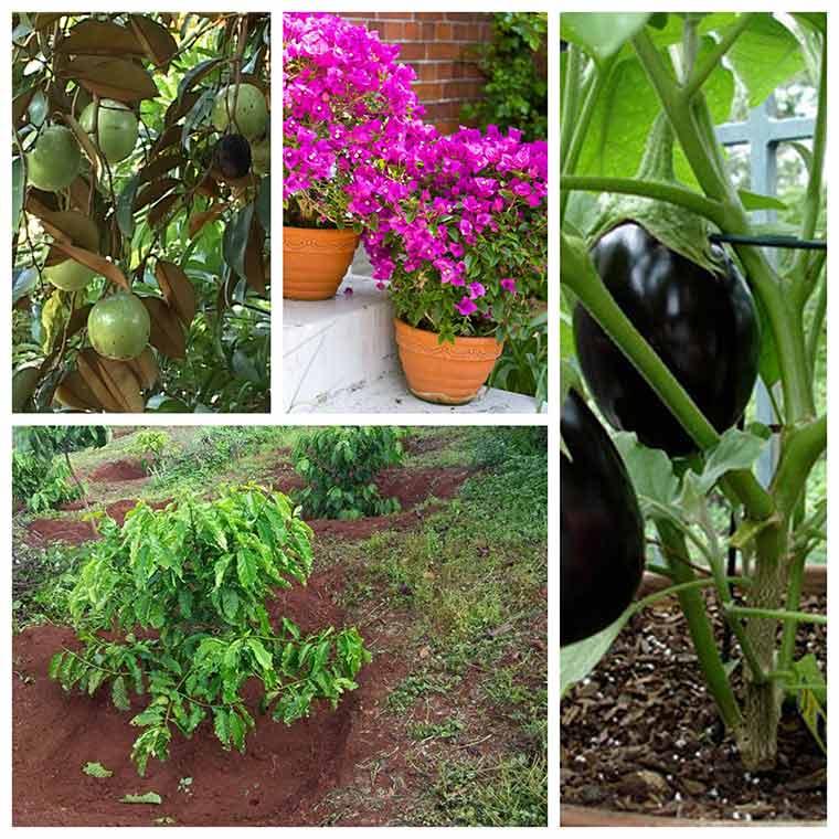cach trong cay dung cach nhat co the ban chua biet 1 - Cách trồng cây đúng cách nhất có thể bạn chưa biết