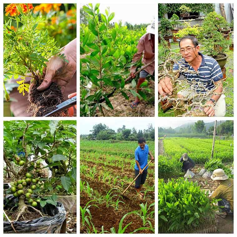 cach trong cay dung cach nhat co the ban chua biet 3 - Cách trồng cây đúng cách nhất có thể bạn chưa biết