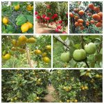 cac ky thuat trong cay an qua hieu qua ban can biet 3 150x150 - Các kỹ thuật trồng cây ăn quả hiệu quả bạn cần biết