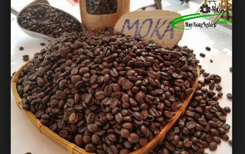 huong dan ky thuat trong ca phe moka thu hoach nang suat cao tu a z 2 - Hướng dẫn kỹ thuật trồng cà phê Moka thu hoạch năng suất cao từ A – Z