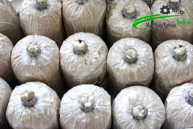 mo hinh trong nam theo cong nghe han quoc doanh thu 20 ty mot nam 3 - Mô hình trồng nấm theo công nghệ hàn quốc-doanh thu 20 tỷ một năm
