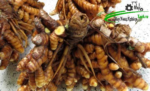 mach ban 11 tac dung cua nghe vang va mat ong doi voi suc khoe 2 - Mách bạn 11 tác dụng của nghệ vàng và mật ong đối với sức khỏe