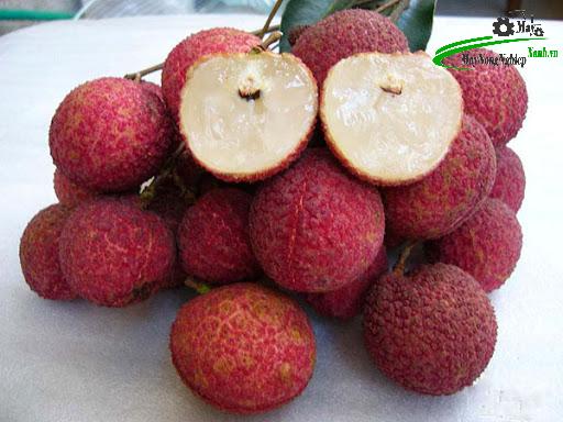 phuong phap trong cay an qua bang thuy canh 3 - Phương pháp trồng cây ăn quả bằng thủy canh