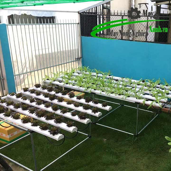 huong dan cach trong rau bang ong nhua pvc dung chuan tu a z 2 - Hướng dẫn cách trồng rau bằng ống nhựa PVC đúng chuẩn từ A – Z
