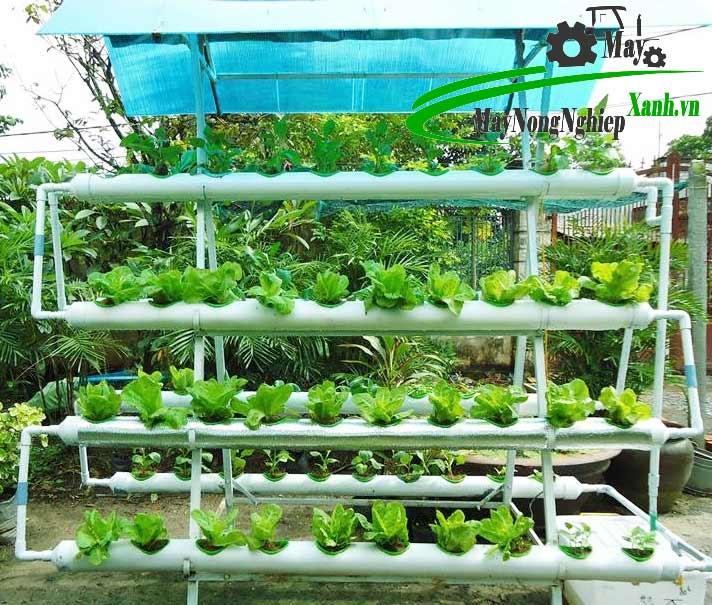 huong dan cach trong rau bang ong nhua pvc dung chuan tu a z 3 - Hướng dẫn cách trồng rau bằng ống nhựa PVC đúng chuẩn từ A – Z