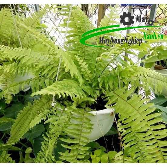 khong nen trong cay gi truoc nha 1 - Không nên trồng cây gì trước nhà?