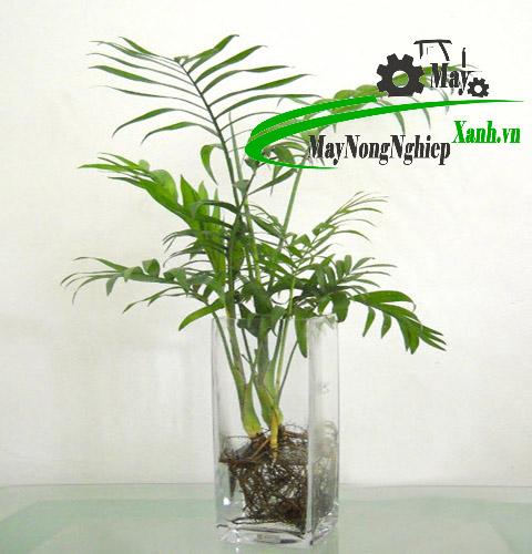 cach chon nhung cay phong thuy trong trong nha phu hop voi moi gia chu 2 - Cách chọn những cây phong thủy trồng trong nhà phù hợp với mọi gia chủ