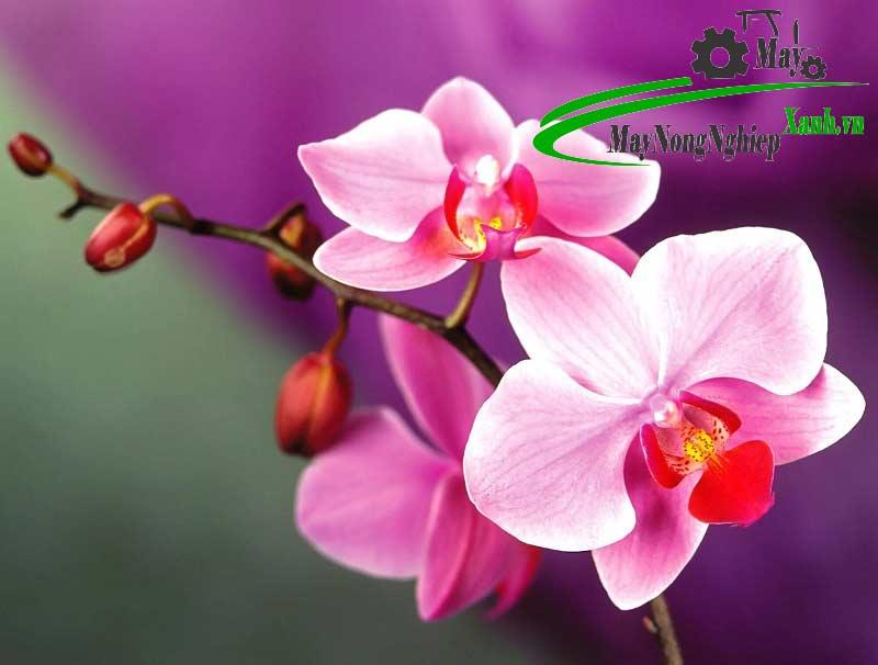 huong dan ky thuat trong hoa lan dung cach chi tiet tu a z ban khong nen bo qua 1 - Hướng dẫn kỹ thuật trồng hoa lan đúng cách chi tiết từ A – Z bạn không nên bỏ qua